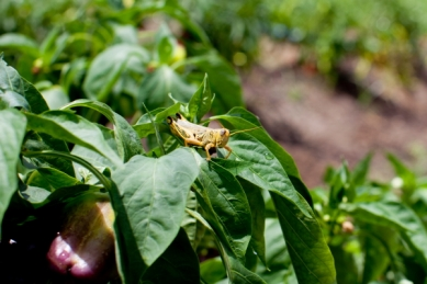 grasshopper(katiepark)_web