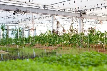 greenhouse1(katiepark)_web