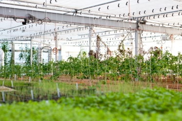 greenhouse1(katiepark)_web