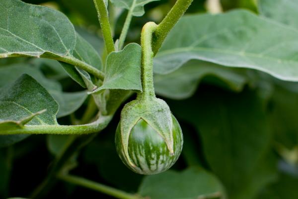 kermit_eggplant(katiepark)_web