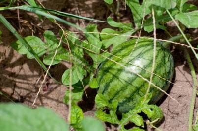 malali_watermelon(katiepark)_web