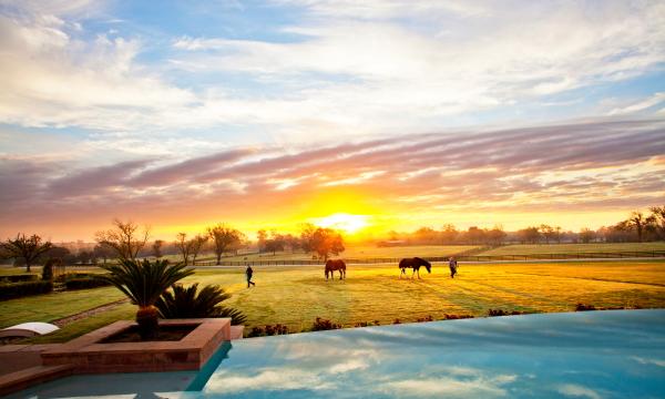 sunrise_horses(katiepark)small